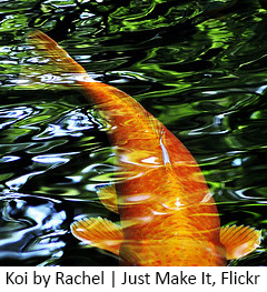 Koi_byRachel_JustMakeIt_Flickr copy